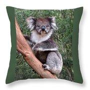 Staring Koala Throw Pillow