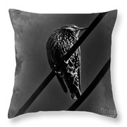 Darling Starling 2 Bnw Throw Pillow
