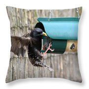 Starling On Bird Feeder Throw Pillow