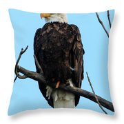 Stately Eagle Throw Pillow