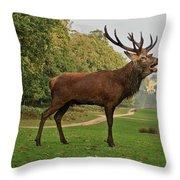 Stately Stag Throw Pillow