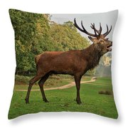 Stately Stag Throw Pillow