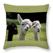 Stealing The Limelight Throw Pillow