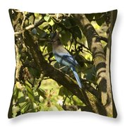 Stellar Jay 2 Throw Pillow