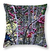 Stellar Jay In Crab Apples Throw Pillow by Will Borden