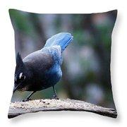 Stellars' Jay Feeding Throw Pillow