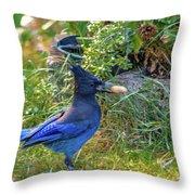 Steller's Jay Throw Pillow