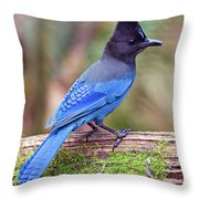 Steller's Jay IIi Throw Pillow