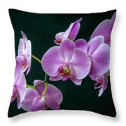 Stem Of Orchids  Throw Pillow