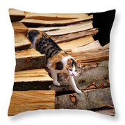 Stepping Down - Calico Cat On Beech Woodpile Throw Pillow