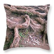 Steps With Roots Throw Pillow