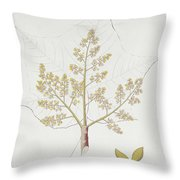 Sterculia Urens Throw Pillow