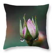 Sterling Rose Throw Pillow