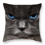 Stern Kitty Throw Pillow