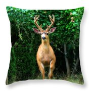 Still In Velvet Throw Pillow