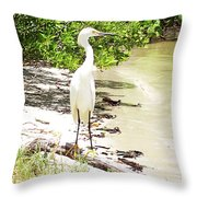 Still Looking For Lunch Gp Throw Pillow