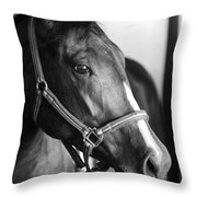 Horse And Stillness Throw Pillow