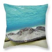 Stingrays Under Water Throw Pillow