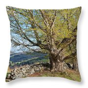 Stone Wall Spring Landscape Throw Pillow