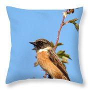 Stonechat On Branch Throw Pillow