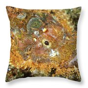 Stonefish Throw Pillow