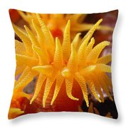 Stony Cup Coral Throw Pillow