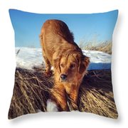 Stop And Stare  Throw Pillow