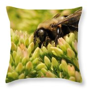 Stop For A Snack Throw Pillow