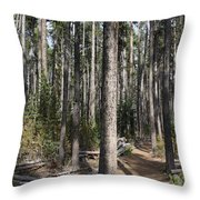 Storm Point Trail Forest Throw Pillow