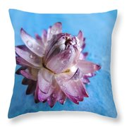 Straw Flower On Blue Throw Pillow