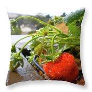 Strawberries And Rain Throw Pillow