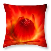Strawflower Sombrero Throw Pillow