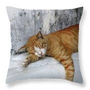 Stray Cat Sleeps On The Floor-2 Throw Pillow