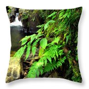 Stream El Yunque National Forest Throw Pillow