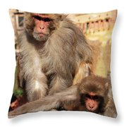 Kathmandu Street Monkeys  Throw Pillow