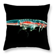 Streetsia Amphipod Throw Pillow