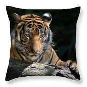 Strength Through Darkness Throw Pillow