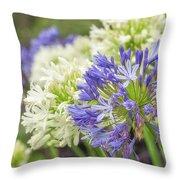 Striking Blue And White Agapanthus Flowers Throw Pillow