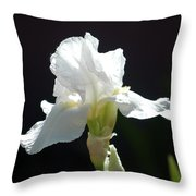 Striking White Iris Throw Pillow