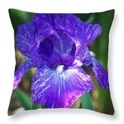 Striped Blue Iris Throw Pillow
