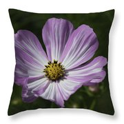 Striped Cosmos 1 Throw Pillow by Roger Snyder