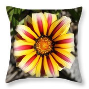 Striped Daisy Square Throw Pillow