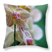Striped Orchid 1 Throw Pillow