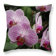 Striped Orchids With Border Throw Pillow
