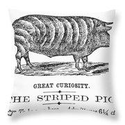 Striped Pig Curiosity Throw Pillow