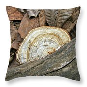 Striped Shelf Fungus - Basidiomycota Throw Pillow