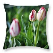 Striped Tulips In Spring Throw Pillow