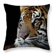 Stripes, No. 11 Throw Pillow