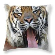 Stripes, No. 16 Throw Pillow