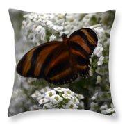 Stripes On Petals Throw Pillow